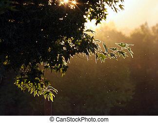 soir, forêt