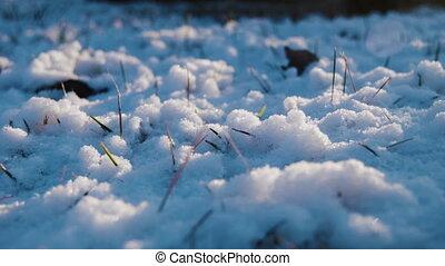 soir, herbe, neige