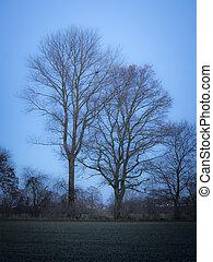 soir, humeur, arbres