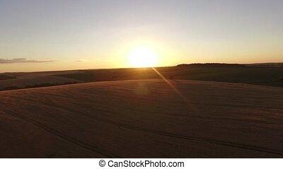 soir, vol, sur, champ, coucher soleil, blé, aerial: