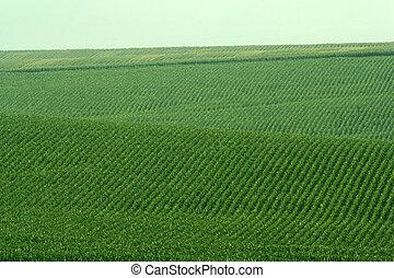 sojas, colinas verdes