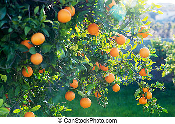 sol, árvore, através, chama, laranja, brilhar