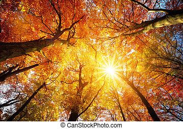 sol, árvore, outono, através, dossel, brilhar