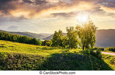 sol, atrás, el, árboles, en, ladera