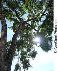 sol, através, árvore