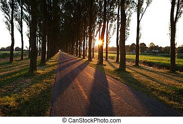 sol, através, árvore, filas, após, amanhecer