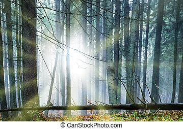 sol, através, árvores, brilhar