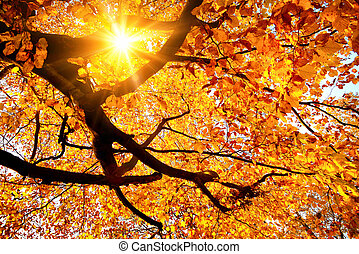 sol, através, ouro, foliage, brilhar