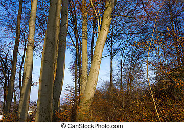 sol, através, ramos, árvore, brilhar