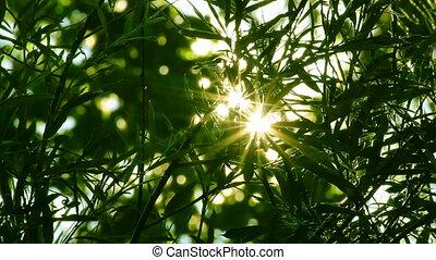 sol brilhante, shines, através, árvore, foliage