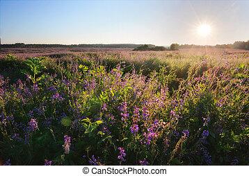 sol brillante, encima, flores, campo