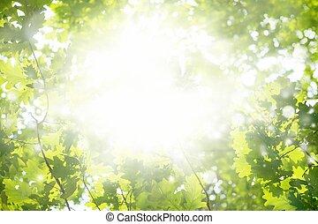 sol, brillante, verde, hojas