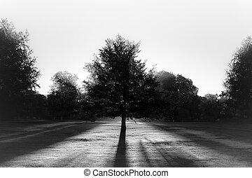 sol, bw, parkera, mot, träd