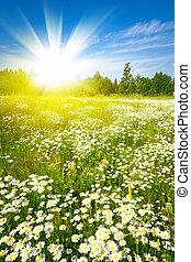 sol, campo verde, ocaso, fresco, pasto o césped