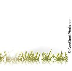 sol, capim, verde, reflexão, isolado