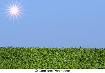 sol, cielo, y, pasto o césped