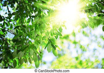 sol, e, leaves., verde sai, ligado, um, fundo, de, céu azul,...