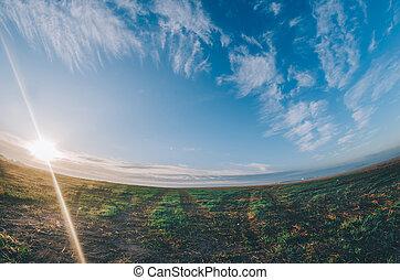 sol, em, campo