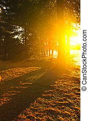 sol, em, noite, floresta, perto, lago