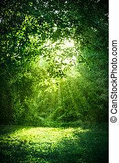 sol, en, bosque