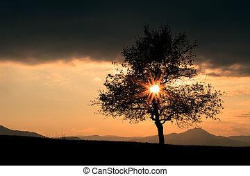 sol, encima, el, árbol