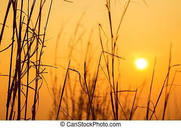 sol, evening., pradaria, céu
