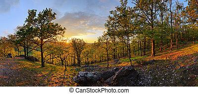 sol, -, floresta, panorama