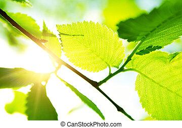sol, folhas, verde, raio