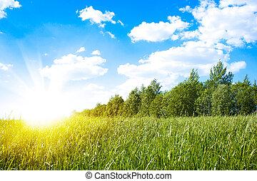 sol, grön, fält, solnedgång, frisk, Gräs