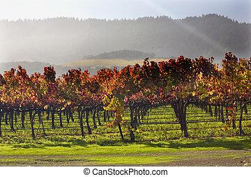 sol, hojas, debajo, amarillo, viñas, california, napa, otoño, vigas, rojo