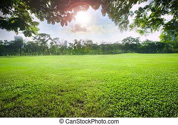 sol lätta, över, sky, in, vacker, grönt gräs, fält, av, publik parkera