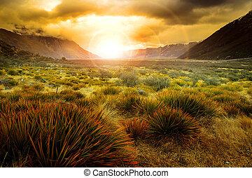 sol, levantamiento, atrás, campo de la hierba, en, país abierto, de, nueva zelandia, paisaje, uso, como, hermoso, natural, plano de fondo