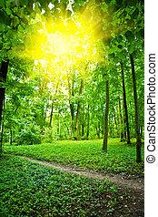 sol, ligado, glade, em, floresta