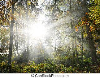 sol, madeiras, através, árvores, brilhar