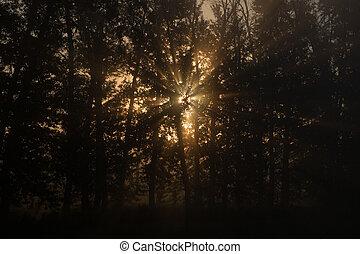sol, manhã, bonito, raios, floresta
