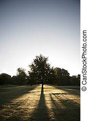 sol, parkera, mot, träd