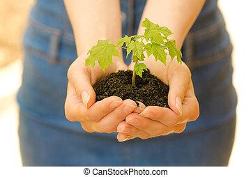 sol, plante, mains