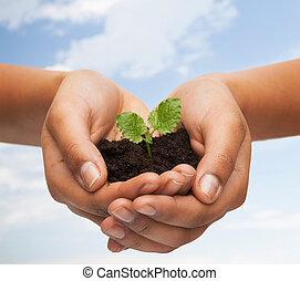 sol, plante, tenue femme, mains