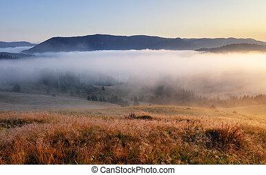 sol, prado, mountain., floresta, landcape