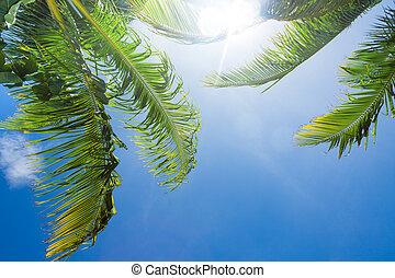 sol que brilla, por, palmera, hojas