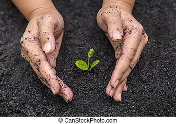 sol, sapling, tenue, surface, mains