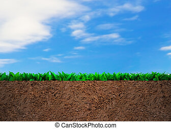 sol, section, herbe, croix