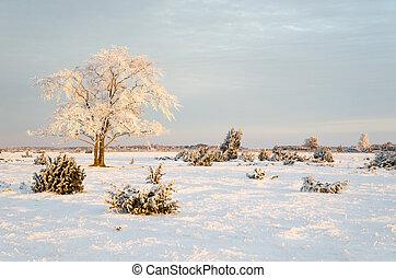 sol, solidão, árvore, manhã, gelado, primeiro