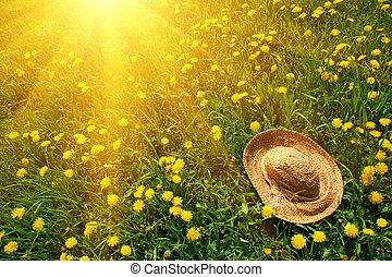 sol stråler, på, grønnes græs, hos, strå hat