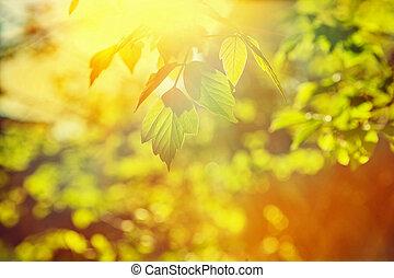 sol, translúcido, através, folhas, de, um, árvore, instagram, stile
