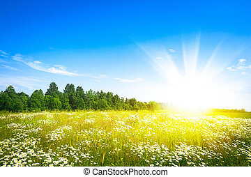 sol, verde, campo, ocaso, fresco, pasto o césped