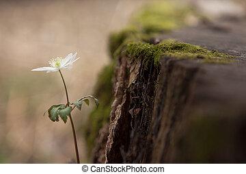 sola flor