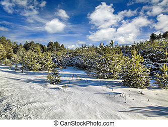 solaire, hiver, jour, dans, bois, belarus