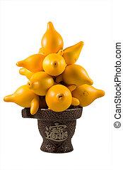 Solanum mammosum - Ornamental solanum mammosum plant,...