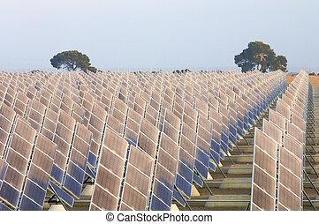 sunrise on a large group of photovoltaic panels and two trees